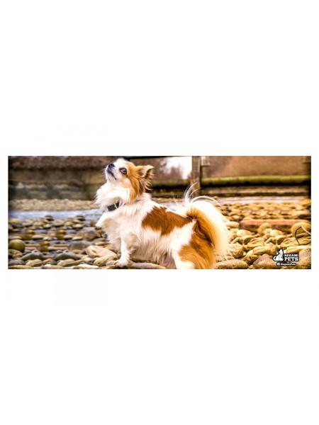 Tarro de Cristal con Popote Chihuahua