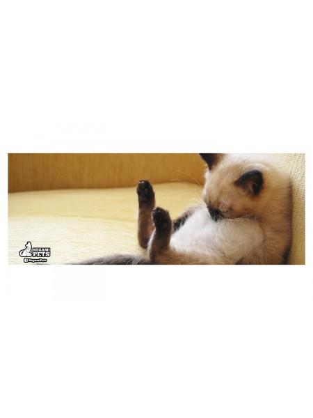 Tarro de Cristal con Popote Gato Dormilón
